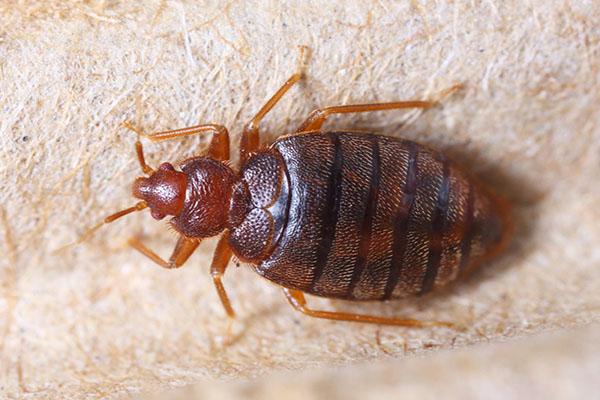 Signs-Your-Room-Has-Bed-Bugs-Main Services